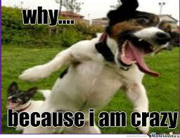 Hyper Dog Meme - crazy dog by quincy nijp meme center