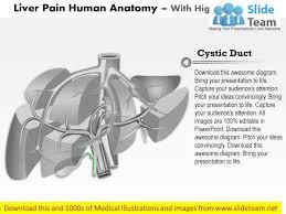 Human Anatomy Diagram Download Human Liver Anatomy And Physiology Pdf Anatomy Chart Body