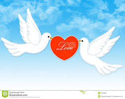 wedding dove couple royalty free stock images image 7368589