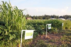 caes newswire fall cover crops