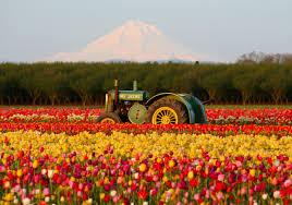 Netherlands Tulip Fields Tulip Fields Lisse Netherlands