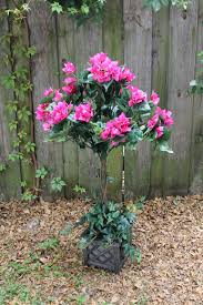 Bougainvillea Topiary - product reviews frugality is free
