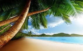 animated beach free download clip art free clip art on