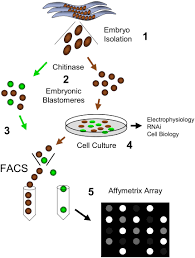 methods in cell biology