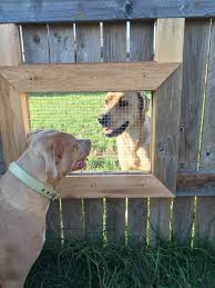 i built a window in my fence so my dogs can visit with the