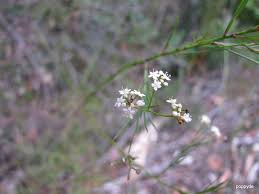 native plants names sydney u0027s wildflowers and native plants names not known dural