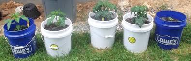my second 5 gallon bucket garden tomatoes red bells green