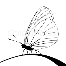 butterfly silhouette on white background stock photo colourbox