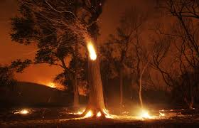 Wildfire La Area by Wildfire North Of Los Angeles Is 40 Percent Contained Monday