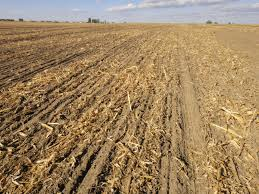 irrigated corn using crop residues to get out of the dammer diking tillage cycle
