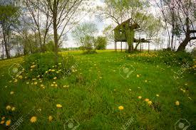 House Lens Landscape Of Rural Dandelion Meadow With Tree House Fisheye