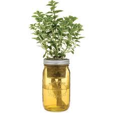 garden jar greek oregano u2013 modernsprout