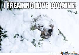 Bear Cocaine Meme - cocaine bear must see imagery 50 hilarious photos to get you