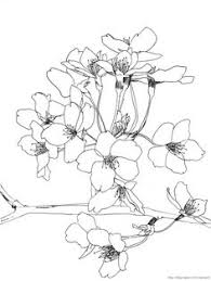 how to draw a sweet pea flower sweet pea coloring page drawing