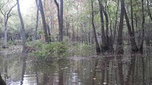 Underground Duck Blind Land For Sale