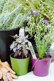 making your herb garden grow u2013 north scottsdale lifestyle magazine
