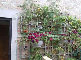 cherry tomato vines grow beyond the top of the trellis late into