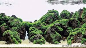 Most Beautiful Aquascapes Gallery Aquascape Home Design How Your Can Go From Aquarium To Art