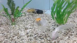 types of aquarium different types of aquarium fish youtube