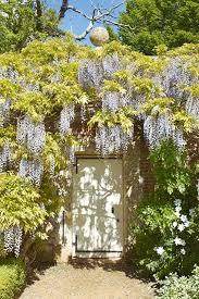 cover the walls in wisteria country garden design ideas