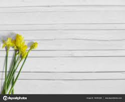 spring or easter styled stock photography with yellow daffodil