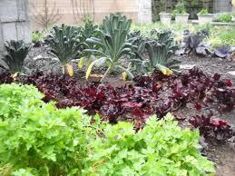 maintaining a vegetable garden hgtv