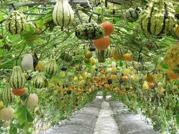 How To Make An Urban Garden - charming inspiration pictures of vegetable gardens lovely ideas