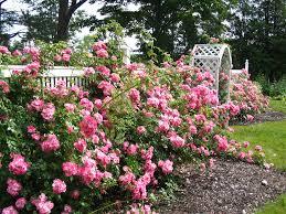 home and decorating garden ideas rose garden design ideas garden design ideas to
