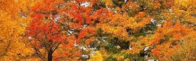 landscape trees fall color northern virginia