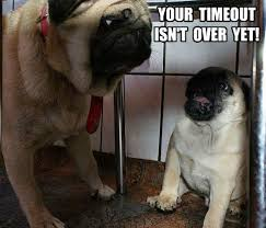 Disappointed Dog Meme - the disappointed mom face pug meme funny cute pugs