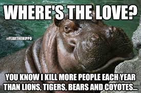 Hippo Memes - hungry hippo memes quickmeme