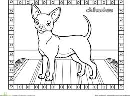 coloring pages chihuahua puppies chihuahua dog worksheets dog and adult coloring
