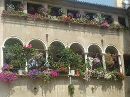 pflanzen f r balkon pflanzen balkon beautiful home design ideen johnnygphotography co