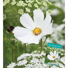 Cut Flower Garden by Cosmos Bipinnatus U0027purity U0027