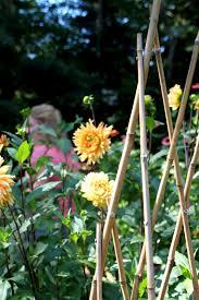backyard cutting flower garden tour u0026 chickens tilly u0027s nest