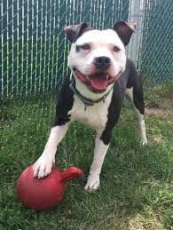 available dogs pet refuge