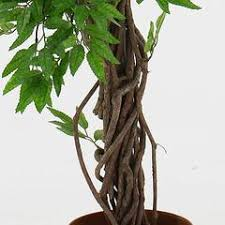 stylish artificial trees luxury artificial trees for offices