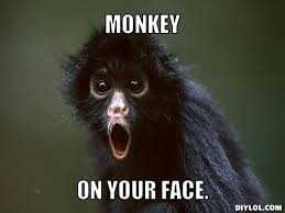 Your Face Meme - 45 very funny monkey meme images gifs photos pictures picsmine