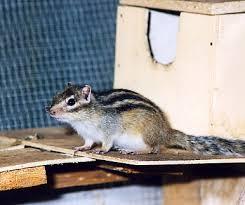 gabbie scoiattoli scoiattoli