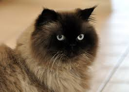 if you were a cat what would your cat name be quiz