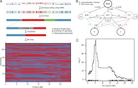 Linkage Map Parent Independent Genotyping For Constructing An Ultrahigh
