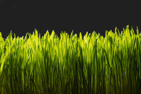 lawn fertilizer dangers are they giving you cancer reader u0027s digest