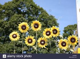 Fake Sunflowers Fake Sunflowers Against A Tree And Blue Sky Background On Top Of