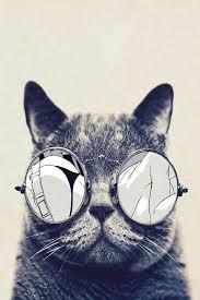 wallpaper cat whatsapp fondos divertidos para whatsapp pinteres