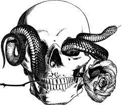 human skull snake png digital graphics image
