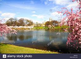 the cherry blossom festival in new jersey stock photo royalty