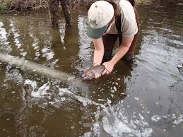 Michigan Dnr Lake Maps by Dnr Large Trout Stocked In Southeast Michigan U0027s Huron River And