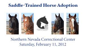 mustang adoptions the results of the prisoner trained mustang adoption