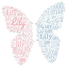and s name butterfly