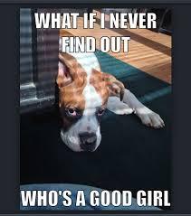 boxer dog sayings 16 best dog memes images on pinterest dog memes boxers and